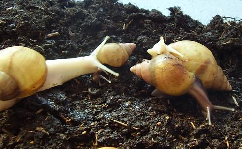 snails 022