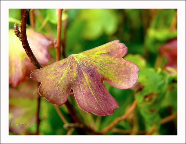 #196/365 Leaf