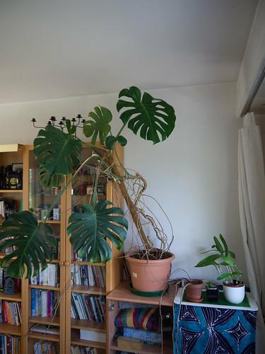 My Plants 11.jpg