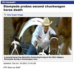 Second chuckwagon horse death - Does Calgary Stampede get it? - Doing your part to help change Calgary Stampede