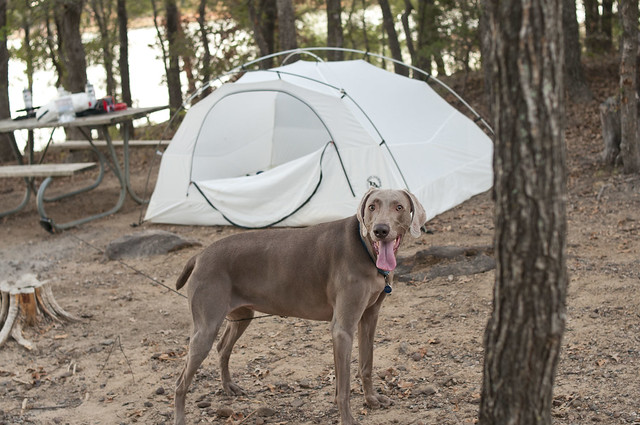 Jade Tent
