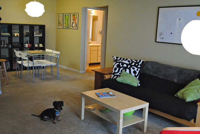 [213/365] Apartment w/ Dog