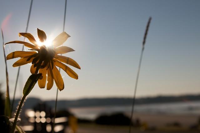 Light your daisy