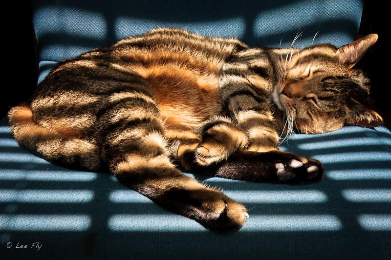 warm kitty, soft kitty, little ball of fur ...