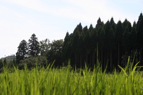 Fields and forests