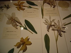 Glass orchids