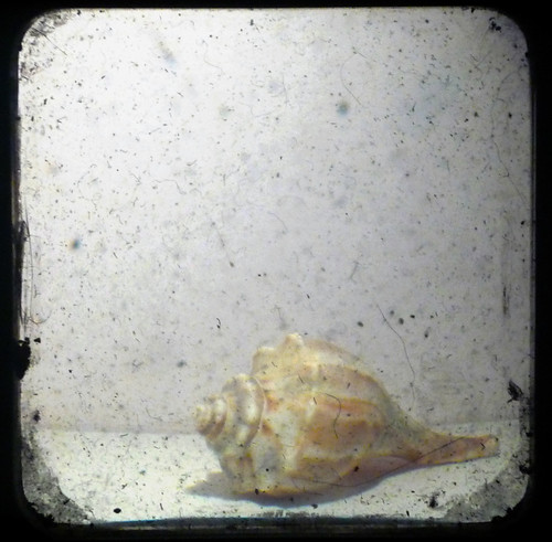 shell by oddinkwell