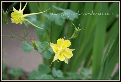 WM Spring Flowers 1