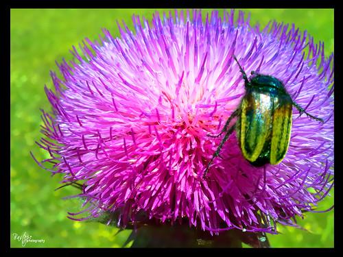 Böceğimmm by Bastepe