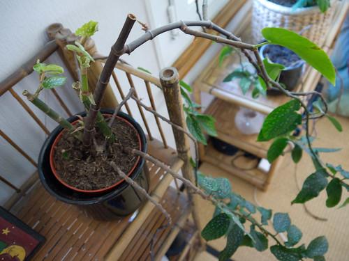 My Plants 5.jpg