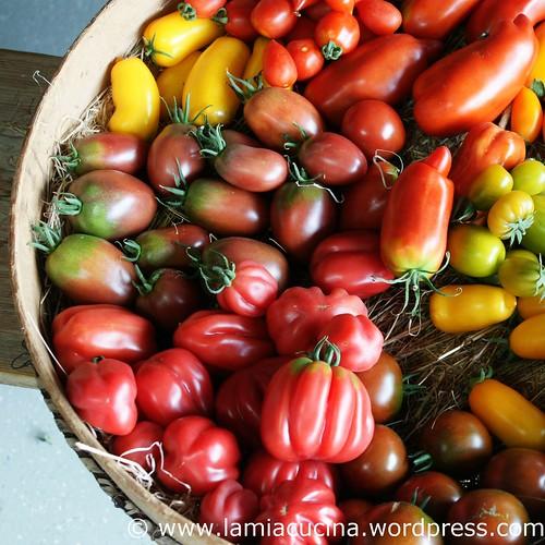 Hämiker Tomaten 3_2011 08 05_5336