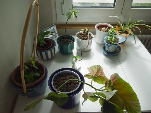 My Plants 9.jpg