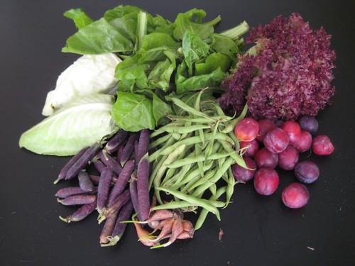 Amelishof organic CSA vegetables week 29, 2011