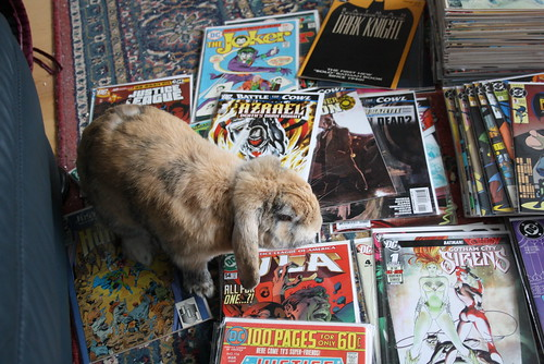 Snoopy sitting on Comics - 17.07.2011