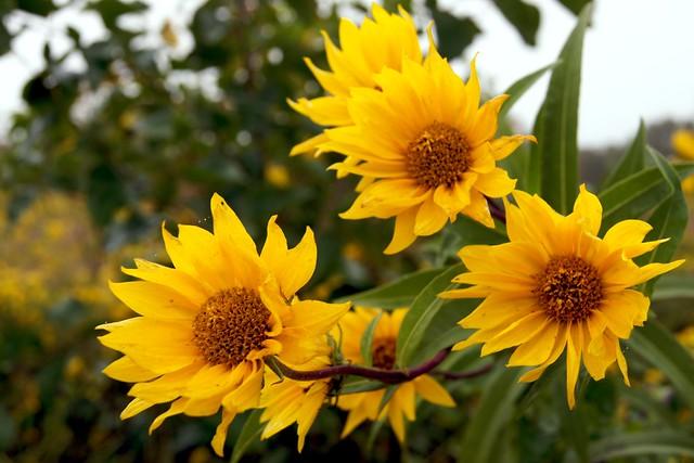 Summer Flower 3