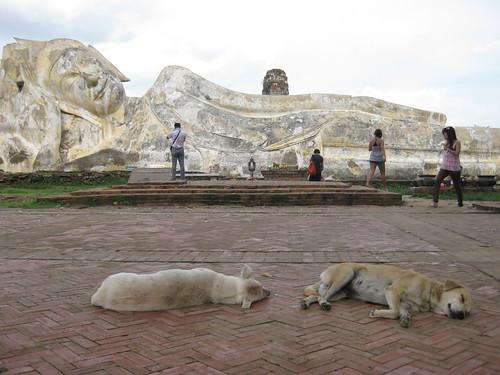 18/9/2011 - Reclining Budha (Ayuthaia/Thailand)