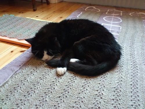 fritz resting on my knitting