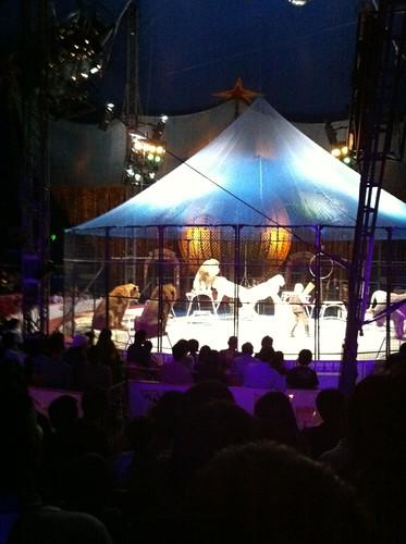 Lions at Kinoshita Circus in Matsuyama!