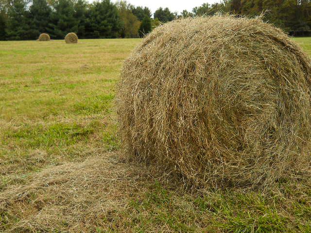 farmgirl-3939.jpg