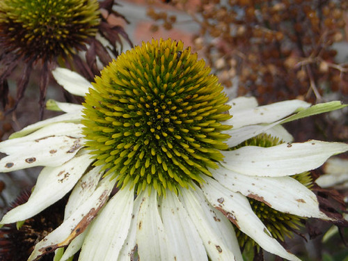 September flowers 01