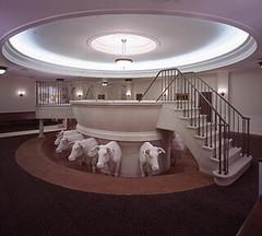Mormon Temple Baptistry