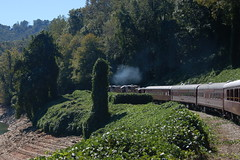 Great Smoky Mountains Railroad-47