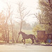 Horse & Buggy