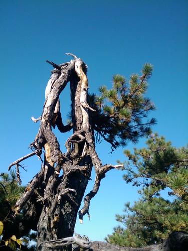 Flourishing Broken Tree