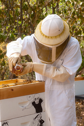 Feeding Knives some cheap honey to help her through the drought.