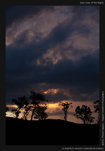 Dark skies of the Nilgiris