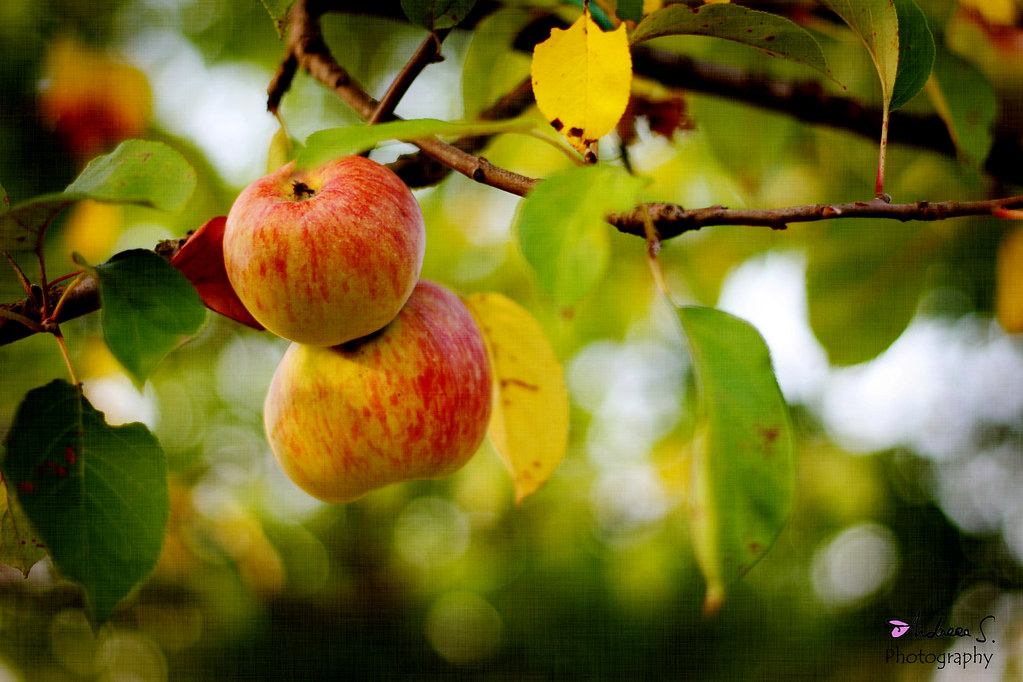 When God ripens apples, He isn't in a hurry and doesn't make a noise