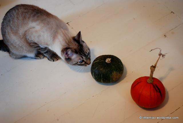 squash 9-28-2011 1-45-11 PM