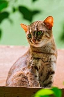 [フリー画像] 動物, 哺乳類, 猫・ネコ, サビイロネコ, 201109132300