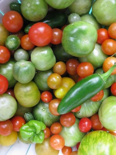 school vegetable bounty