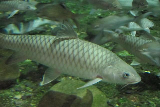 百年光輝慶十月 到海生館認識臺灣特有魚種 @ 羅琳娜夫人與寶臨 :: 痞客邦