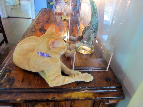 one of the many hemingway house cats