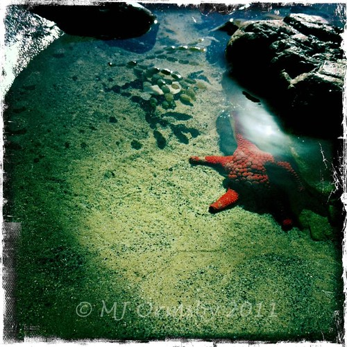 Glowing Red Rock Star #iphoneography by cwithnueyes
