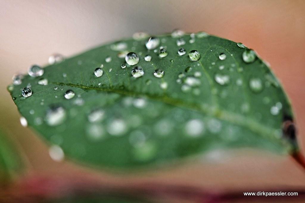 Dewdrop by Dirk Paessler