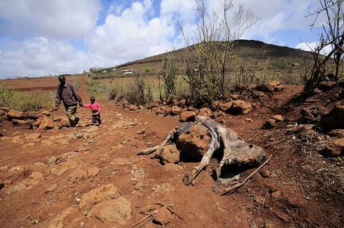 NP Kenya 211011_33