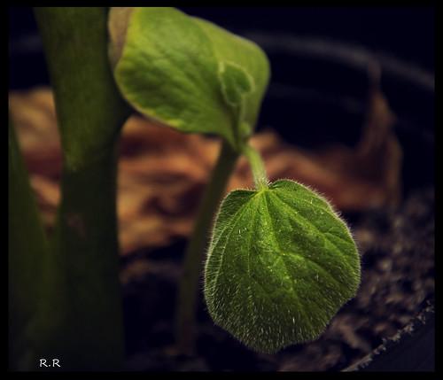 74/365 - Keep on Grownig by EcoVirtual