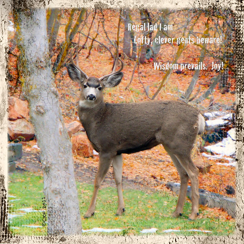 Autumn Buck Haiga