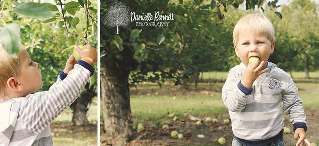 daniellebennettphotographyapples1