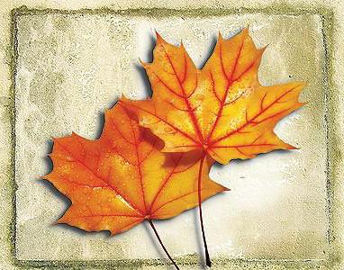 55159255-hanhdttchiecla-autumn1