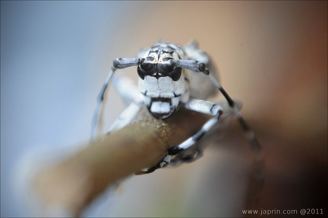 Photo Camp Sabah 2011 : Close Up & Macro Session