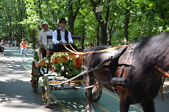Horse carriage in Herastrau Park