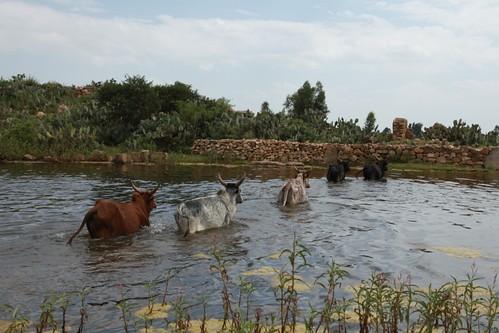 Water reservoir at Tsinkanet, Mek'ele, Ethiopia