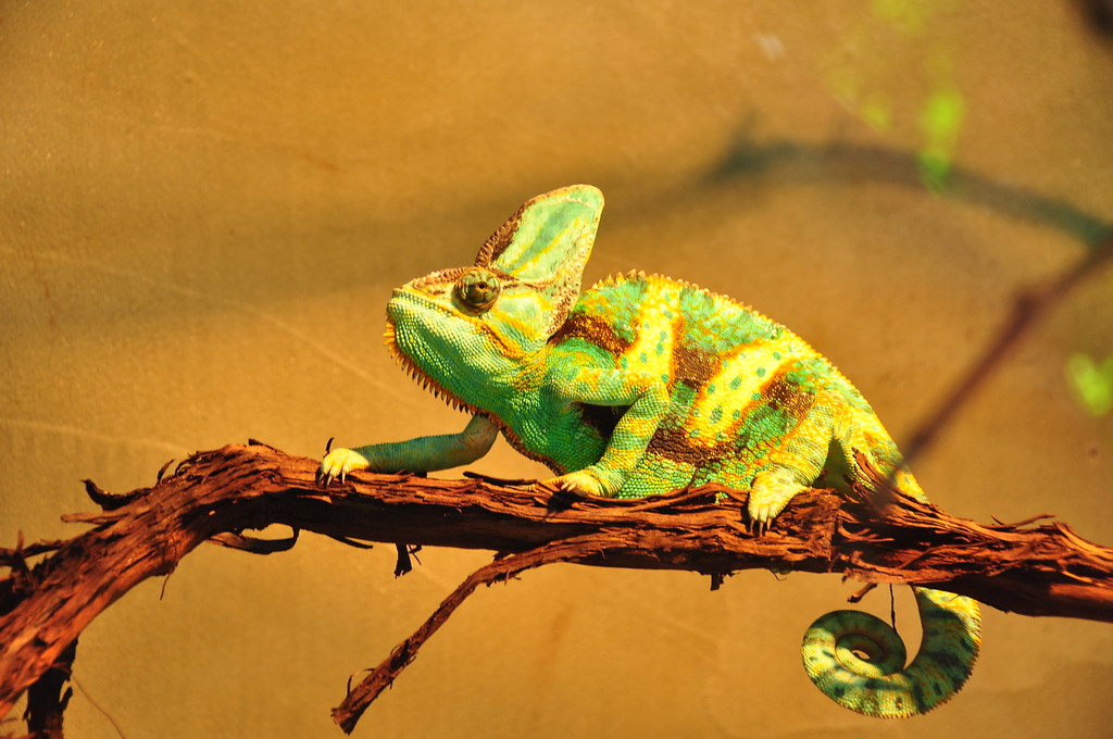 Chameleon by Wanda G, on Flickr