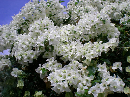 Bunga kertas 3