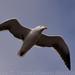 Birds Off the Shell Beach Coast 2