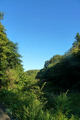 新治市民の森(池ぶち)(Niiharu Community Woods)